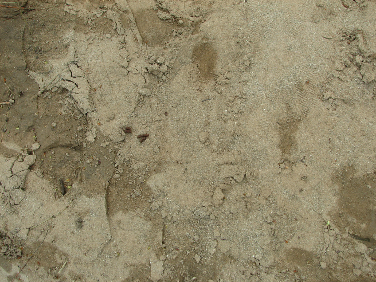 Sand-tracks-01 by