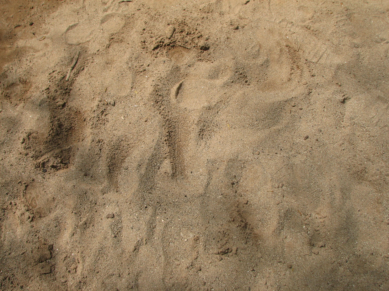 Sand-tracks-02 by